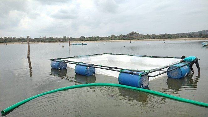 Aquaculture Development Project for sustainable Livelihood in Ampara District – FRESH WATER FISHING